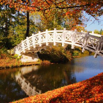 gebogene Brücke über einen Bach mit Herbstbäumen am Ufer, Foto: Adobe Stock, LianeM